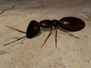 Ant created in Maya
